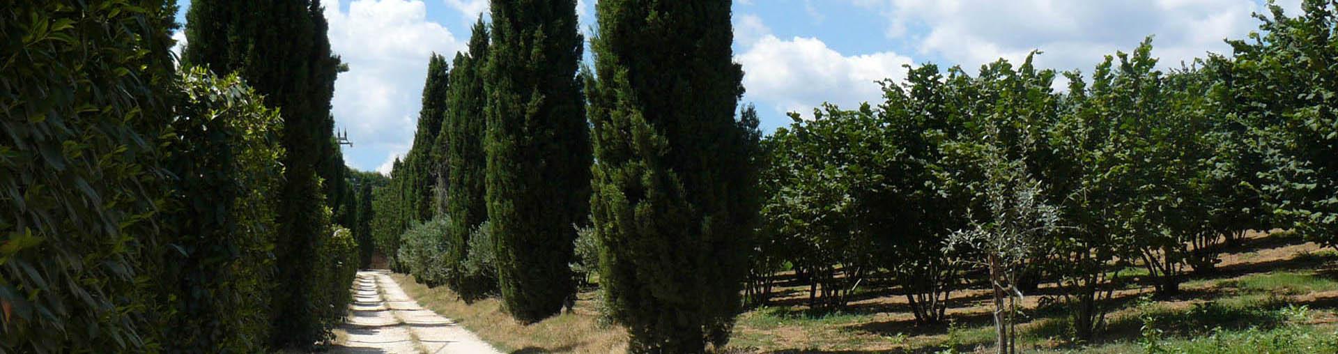 Agriturismo Montefosco